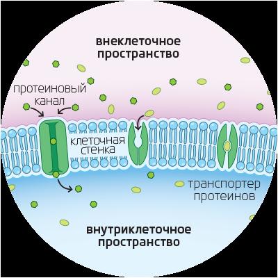 Олигопептиды это гормоны анаболические стероиды.побочные эффекты